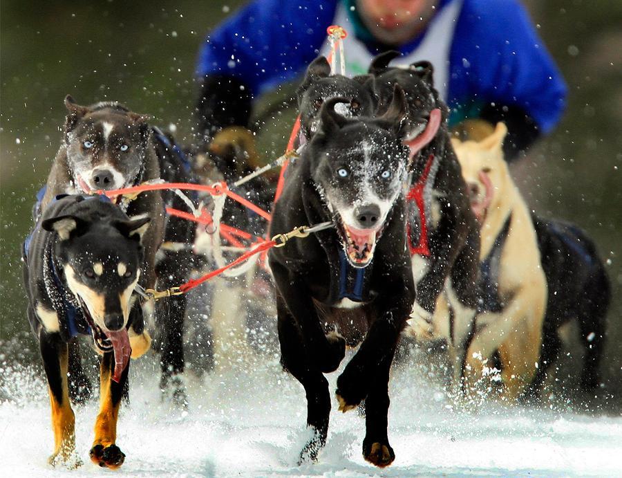 Iditarod Sled Race 2011